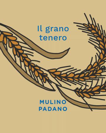 Il-grano-tenero-mulino-padano
